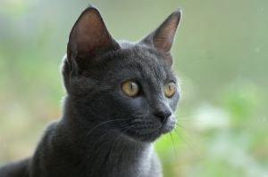 Alert Cat Ears