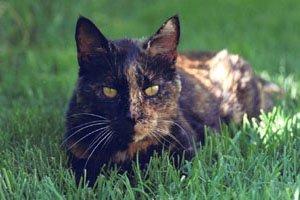 Cat Sleeping and Cat Colitis