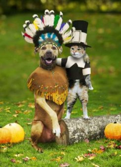 Cute pet clothing example. Dog wearing indian costume and cat wearing Pilgrim costume.